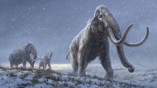 An illustration of the steppe mammoths that preceded the woolly mammoth, based on the genetic knowledge from the Adycha mammoth.