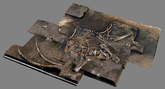 Restos de 300.000 anos de espécies de elefantes são descobertos na Alemanha