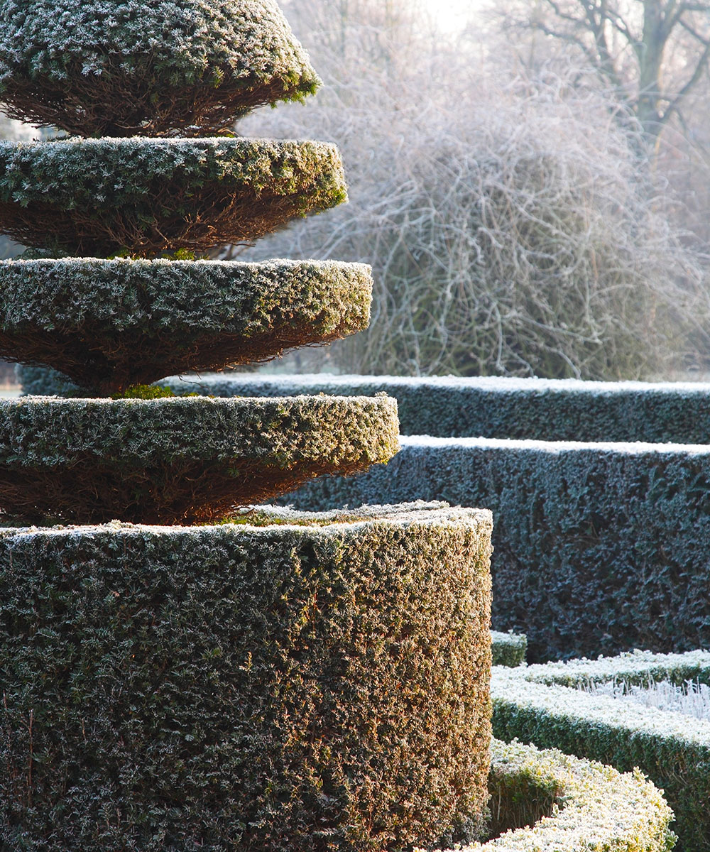 How to create a winter garden – transform your space into a winter wonderland