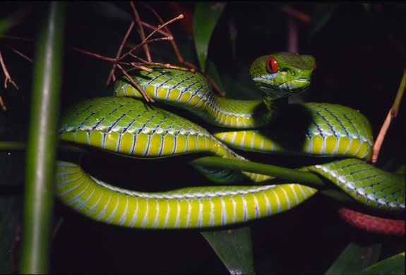 Facts About Vipers Live Science