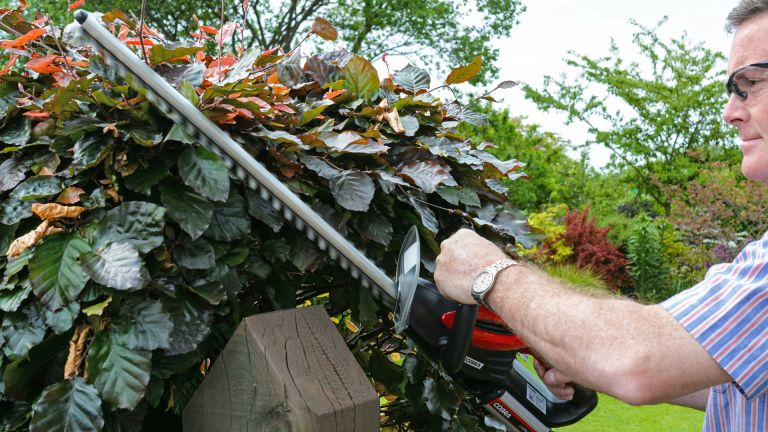 Best hedge trimmer 2020
