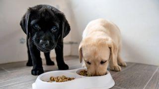 best puppy food