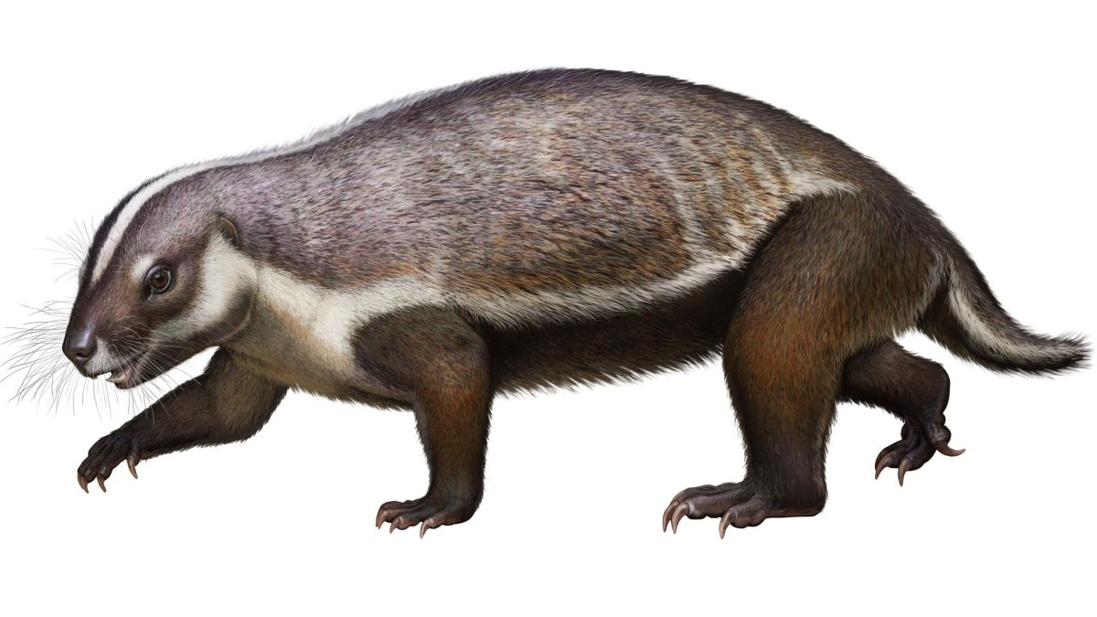Ancient 'crazy beast' from Madagascar had mismatched body and teeth from  'outer space' | Live Science