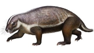 This life-like reconstruction of Adalatherium hui from the late Cretaceous of Madagascar shows off the creature's weird-looking body and plentiful whiskers.