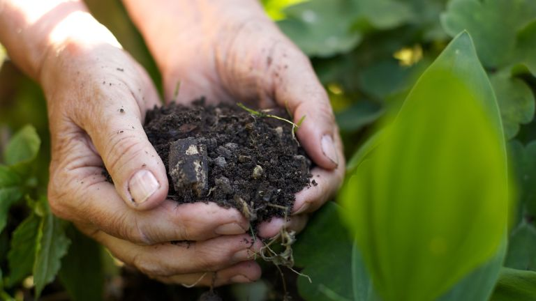 person holding a handful of soil in a garden