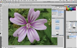 Put to the Test: Adobe Creative Suite 5 Master Collection