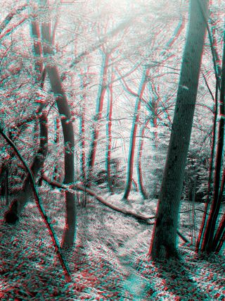 Art of seeing: stereoscopic imagery