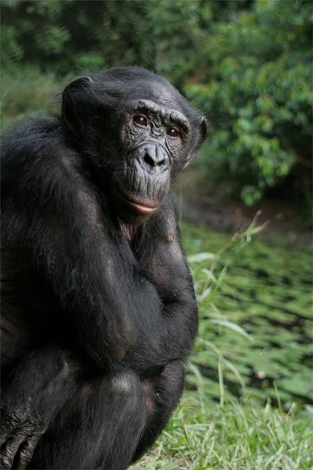 8 Human-Like Behaviors of Primates | Live Science
