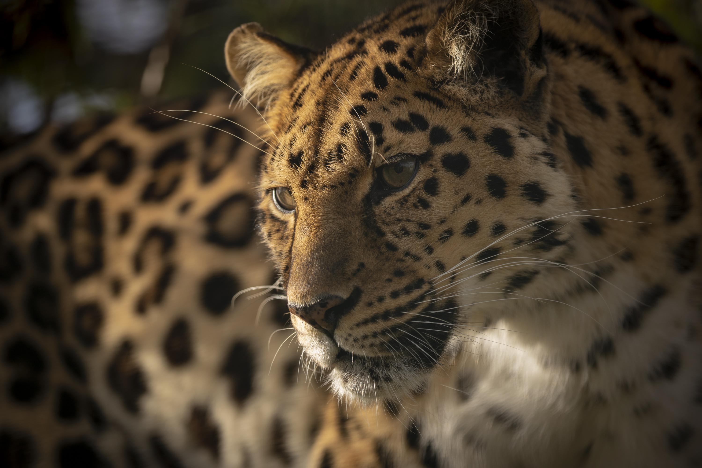 Big cat photo tips | Digital Camera World