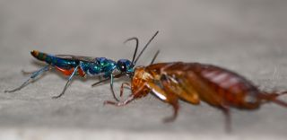 wasp, roach, zombie, parasite