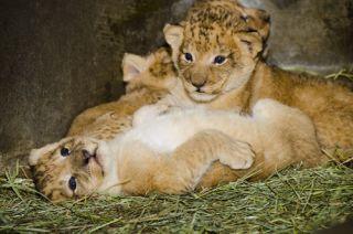 cute animal babies, Woodland park zoo