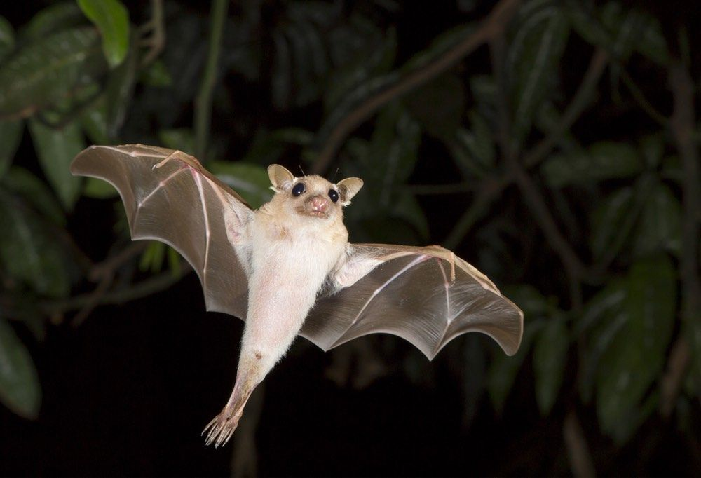 Are Bats Really Blind Live Science