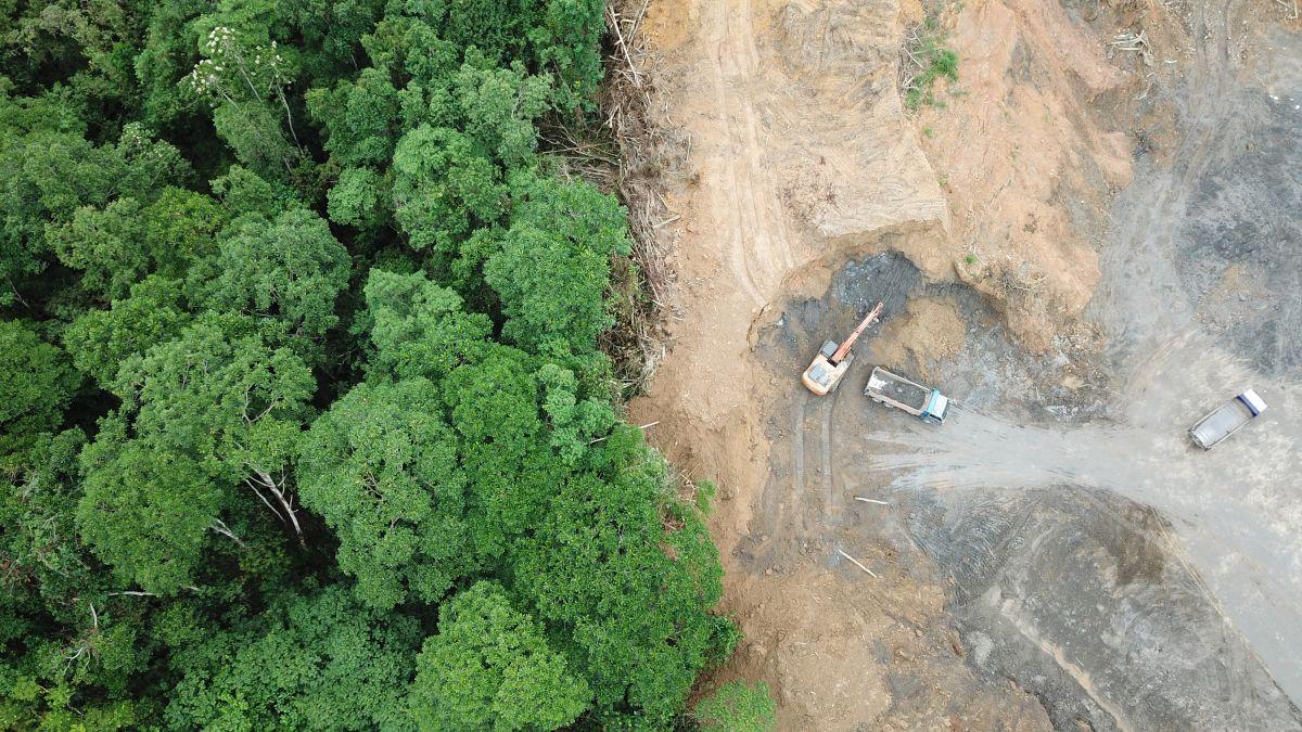 Amazon Deforestation Shot Up by 278% Last Month, Satellite Data Show