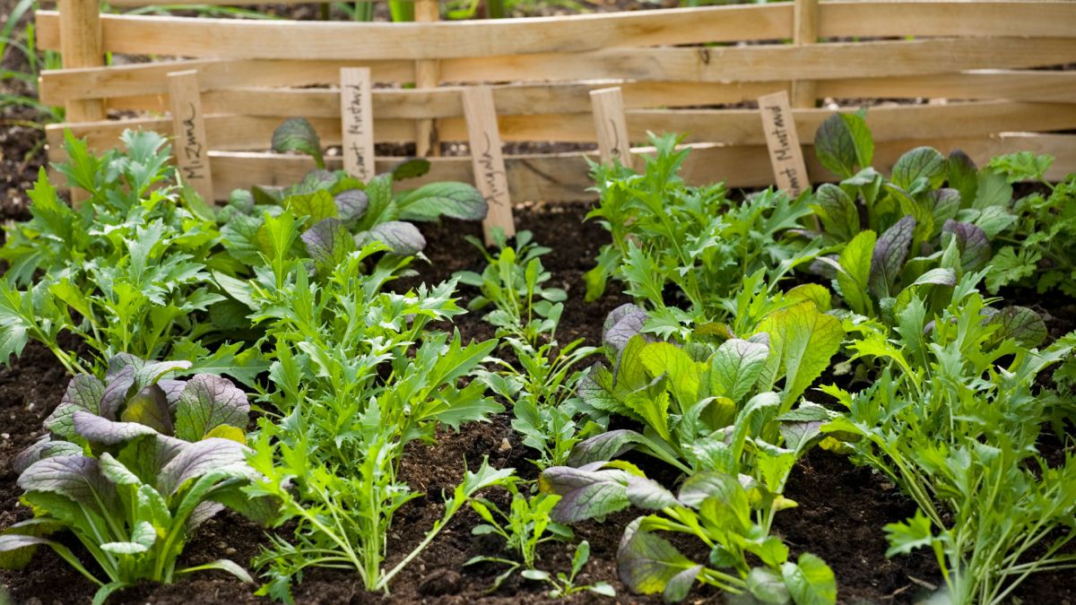 Modern vegetable garden ideas: what to grow and when
