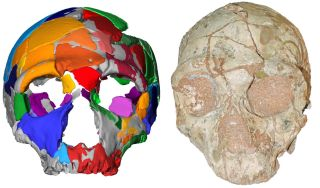 Apidima 2 skull