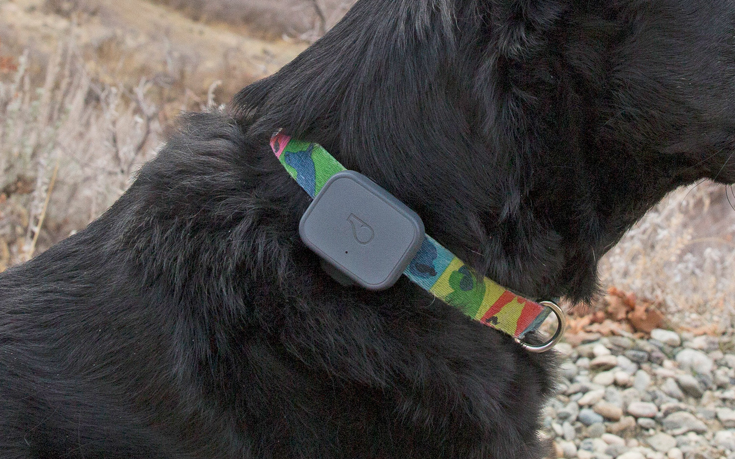 Best Pet Tracking Devices 2019 - GPS Trackers for Dogs, Cats | Top