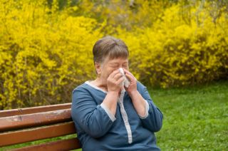 Seasonal allergies cause runny noses and itchy eyes for many people. The most common allergen is pollen.