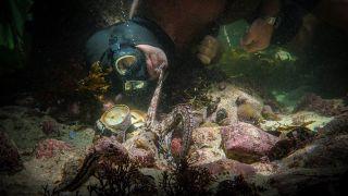 Best documentaries on Netflix - My Octopus Teacher