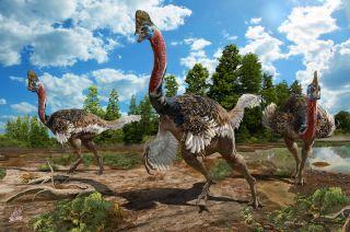 cassowary-like-dinosaur-3