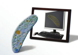 Scientists have created the first complete computer simulation of an organism, an STD-causing microbe called <em>Mycoplasma genitalium.</em>