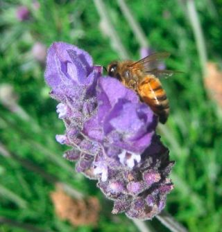 Bee Celestial Navigation and Non-Human Intelligence