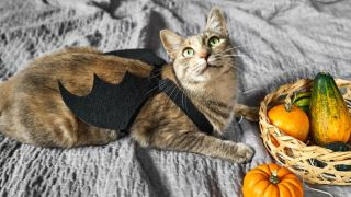 best halloween costumes for cats