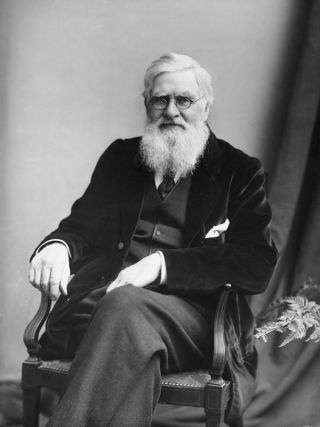 Alfred Russel Wallace, evolution