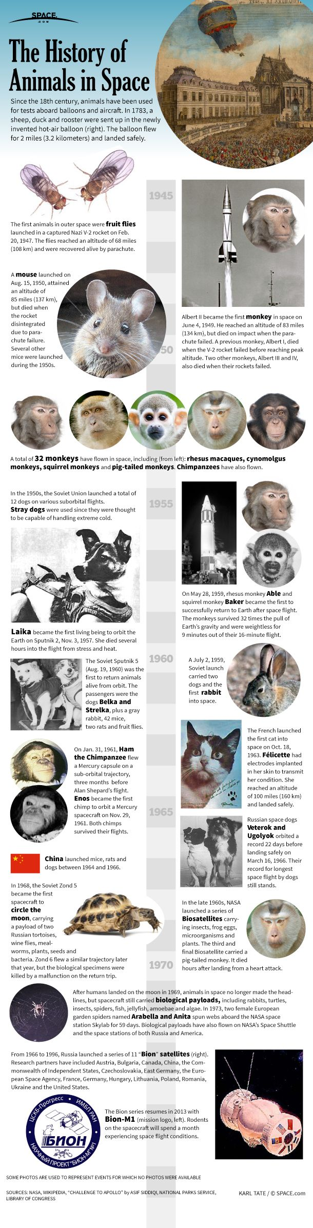 RIP, Laika: Pioneering Dog Launched 60 Years Ago Today | Space