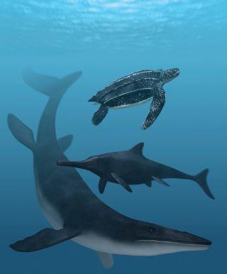 Artist impression of mosasaur, leatherback and ichthyosaur
