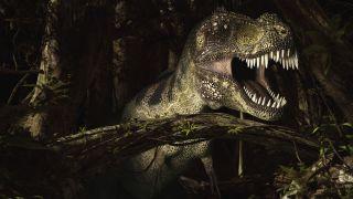 An illustration of a tyrannosaurus Rex