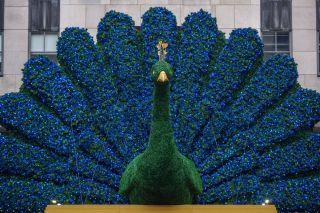 NBCU Peacock Comcast