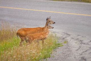 California Map Shutterstockcom.New Roadkill Map Finds California Ring Of Death Live Science