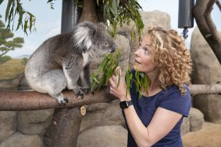 Kate Humble meets a koala