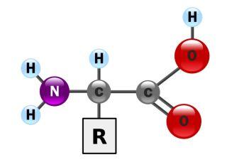 Amino Acid 'Backbone'