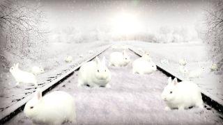 Optical illusion bunnies