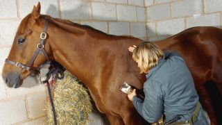 A groomer clips a horse's coat with the best horse clippers starting on the shoulder