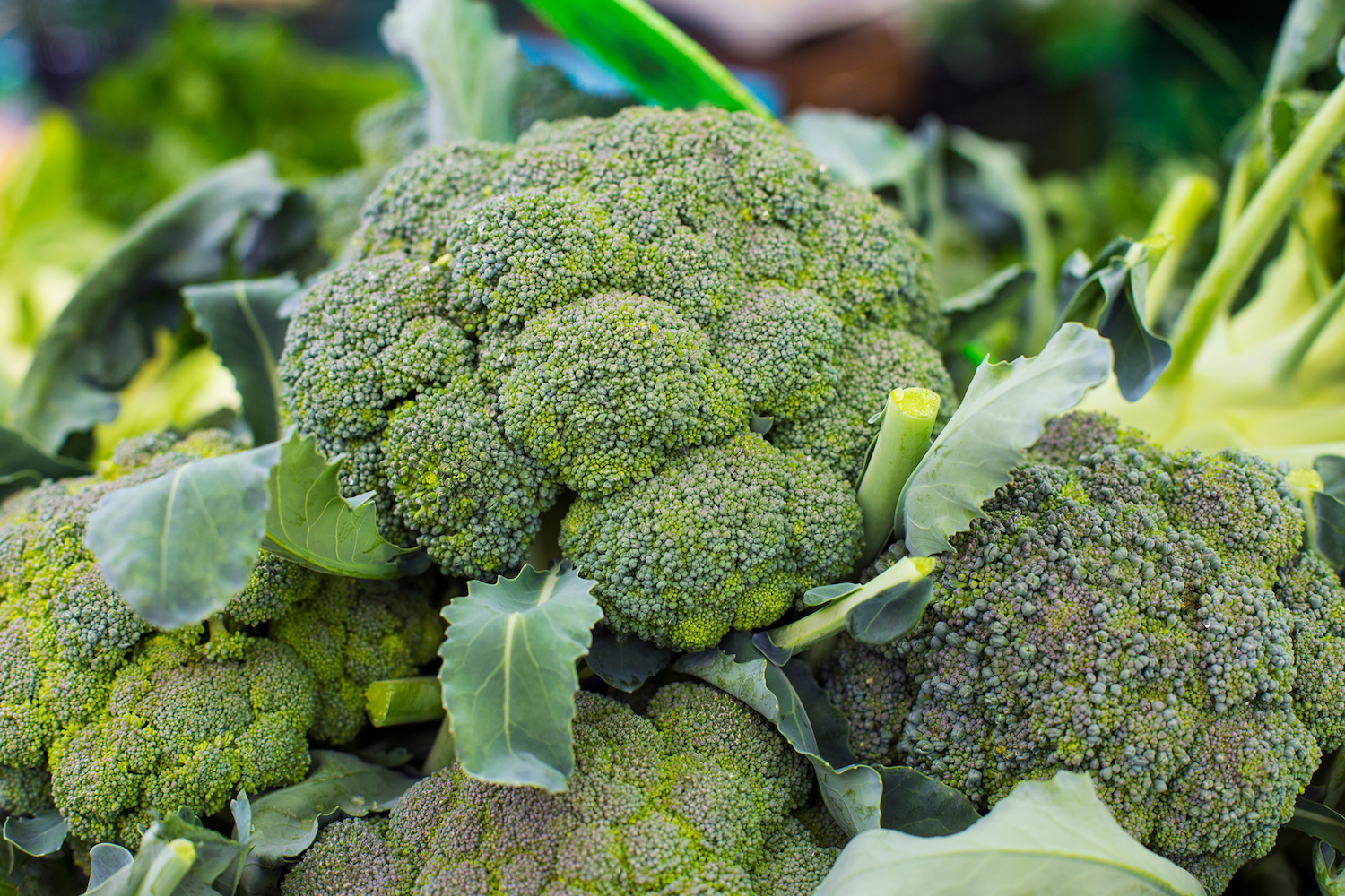 broccoli: health benefits, risks & nutrition facts | live