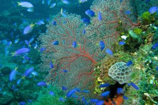 coral reefs are beautiful and diverse ecosystems