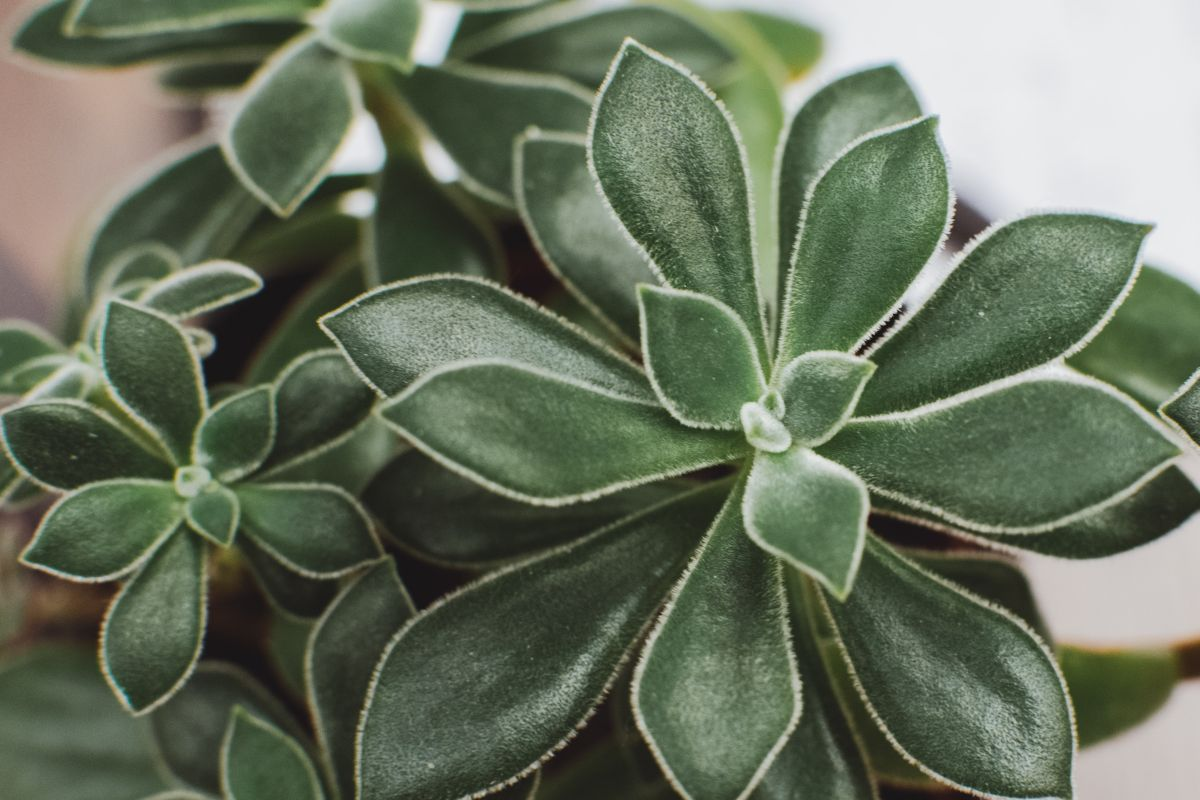 Hilton Carter reveals the one thing you must do to keep house plants alive in winter