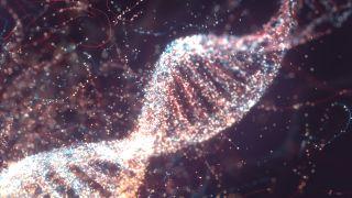 An illustration of a DNA molecule.