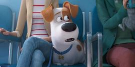 Secret Life Of Pets 2 Trailer Is Full Of Hilariously Unstable Animals