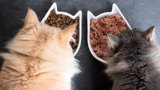 Is dry cat food best? Two cats enjoying wet and dry food