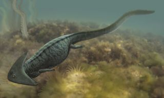 <em>Diplocaulus salamandroides</em> went extinct during the Permian.