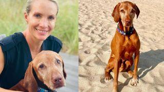 Dana Perino's dog Jasper has passed away