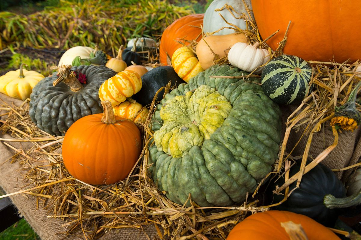 Grow pumpkins with this step-by-step guide