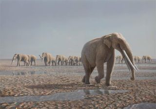 A reconstruction of the <em>Stegotetrabelodon syrticus</em> herd that likely made the tracks in the Arabian Desert.