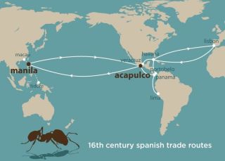 Spanish trade routes in the 16th century that likely spread invasive fire ants around the globe.