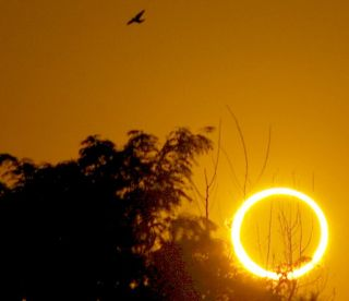 Solar Eclipse with Bird