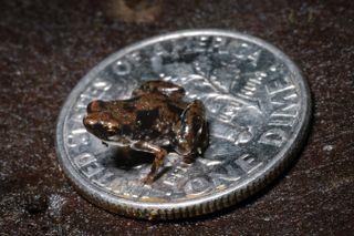 tiny frog image
