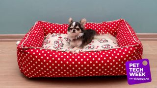 heated pet beds